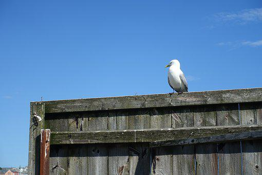 Seagull, Waiting, Traditional, Harbor, Tourism