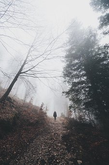 People, Travel, Adventure, Woods, Forest, Mountain