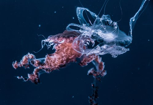 Jellyfish, Aquatic, Animal, Ocean, Underwater, Dark