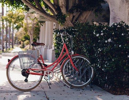Green, Plants, Trees, Flowers, Alley, Park, Shade, Bike