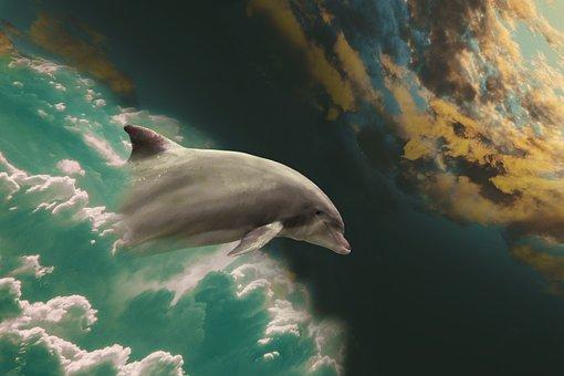 Dolphin, Marine Mammals, Jump, Fantasy Picture, Fantasy