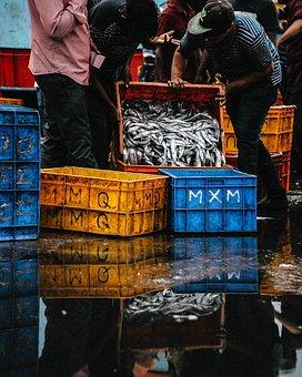 Fish, Fishing, Crate, Barrel, Wharf, Seaport, Water