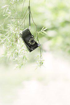 Photo Camera, Vintage, Old, Antique, Camera, Shooting