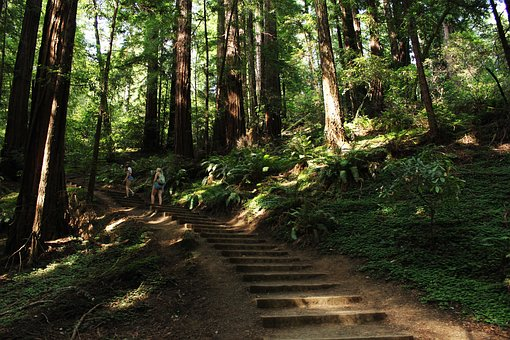 Green, Trees, Plant, Nature, Forest, Stair, People