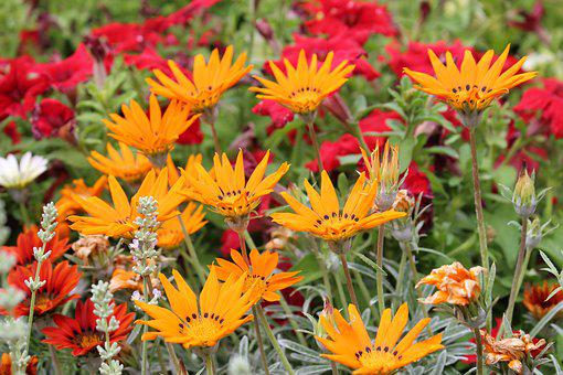 Garden, Flower Bed, Public Garden, Nature, Natural