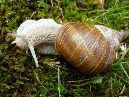 Animal, Snail, Housing-auger, Brown, Damp, Moss