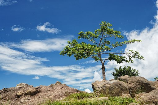 Arbol Solo, Tree, Panoramic, Blue Sky, Mountains