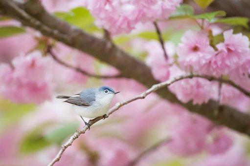 Pink, Flower, Bloom, Blossoms, Petal, Tree, Branch