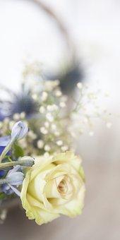 Rose, White, White Rose, Baby's Breath, White Flower