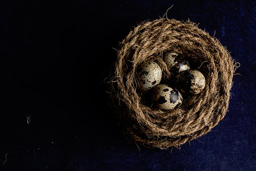 Brown, Rope, Nest, Quail