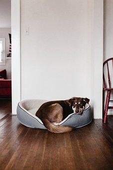 House, Inside, Indoor, Wall, Wooden, Floor, Dog, Animal
