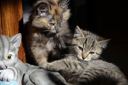 Cat, Small Cats, Three, Friends, Buddy, Babies