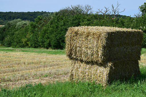 Harvest, Straw, Harvested, Agriculture, Summer