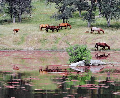 Horse, Animal, River, Water, Reflection, Highland