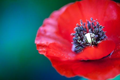Ref, Petals, Flower, Nature