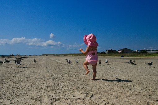 Nature, Beach, Sand, Sky, Clouds, Animals, Birds
