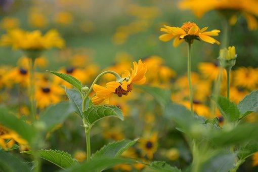 Nature, Flowers, Summer, Yellow, Rabatka Floral, Grass