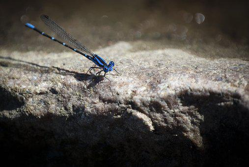 Dragonfly, Wing, Blue, Nature, Insect, Fly, Summer, Bug
