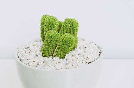 Thing, Plants, Bonsai, Cactus, Green, Thorn, Pot