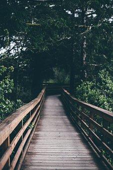 Wooden, Hanging, Bridge, Outdoor, Travel, Green, Trees