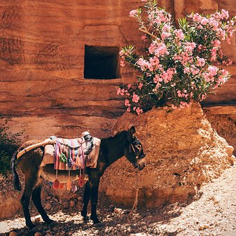 Donkey, Horse, Animal, Pet, Ride, Flower, Plant