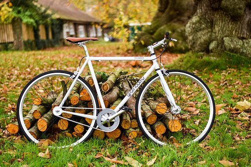 Bike, Bicycle, Woods, Log, Green, Grass, Outdoor, Leaf