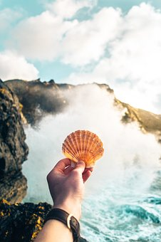 Clam, Shell, Hand, Arm, Watch, Sea, Ocean, Water, Waves