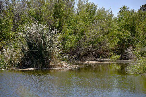 Green Pond, Pond, Lake, Body Of Water, Grassland, Trees
