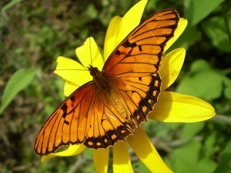 Butterfly, Orange, Wings Orange, Hostal, Sucking