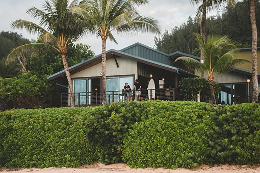 People, Terrace, Balcony, House, Home, Green, Plants