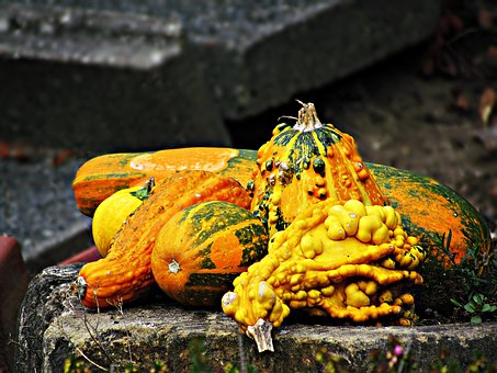 Pumpkin, A Vegetable, Vegetables, Nature, Autumn
