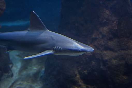Zoo, Fish, Sea, Ocean, Nature, Aquarium, Marine