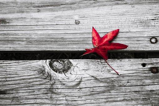 Fall, Leaf, Red, Autumn, Fall Leaves
