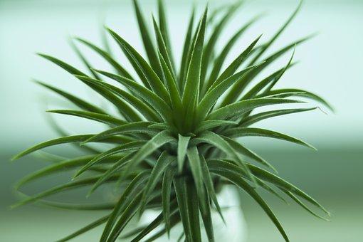 Fleshy In This, Green, Flower, Plants, Tabitha