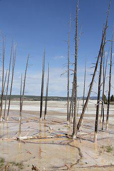 Yellowstone, National Park, Death, Trees, Burn