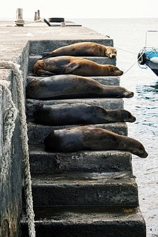 Dolphin, Animal, Sea, Water, Ocean, Creature
