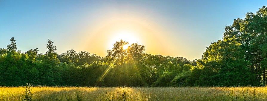 Nature, Outddor, Landscape, Forest, Evening Sun, Meadow