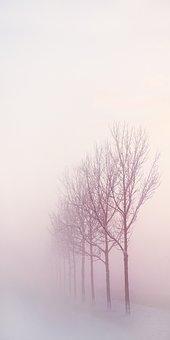 Winter, Winter Landscape, Ripe, Snow, Freezing, Nature