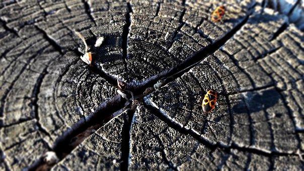 Trunk, Tree, Beetle, Nature, Wood, Texture