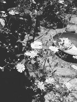 White Flower, Pool, Black And White, Break, Leaves