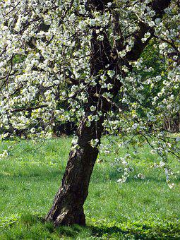 Apple, Flowers, Blooms, Apple Flower, Tree, Sad, Twigs