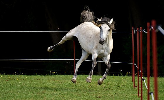 Horse, Mold, Pony, Fool Around, Funny, Cute, Coupling