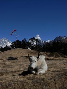 Everest, Lhotse, Nepal