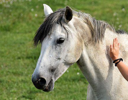 Mold, Horse, Love For Animals, Stroke, Meadow, Coupling