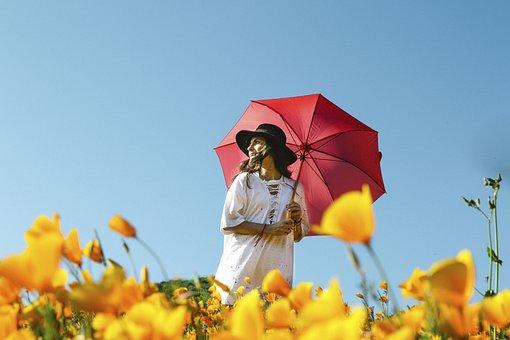 Flower, Yellow, Petal, Bloom, Garden, Plant, Nature