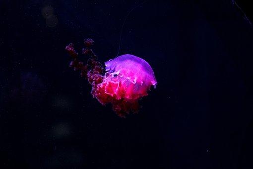 Jellyfish, Underwater, Deep, Sea, Ocean
