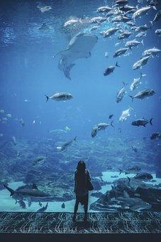 Nature, Waterr, People, Woman, Wander, Alone, Aquarium