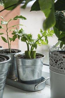 Garden, Decoration, Leaves, Plant, Green, Soil