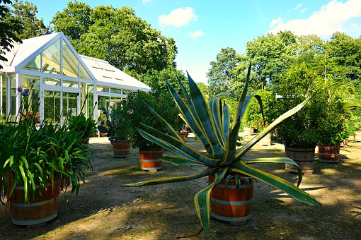 Garden, Orangery, Greenhouse, Conservatory, Glasshouse