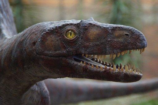 Urtier, Prehistoric Times, Evolution, Exhibit, Museum